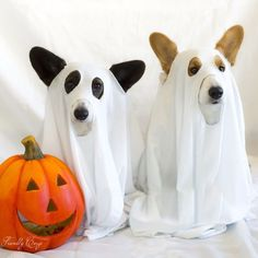 Ghost Corgis OMG....if this isn't the cutest thing ever!! SO clever!