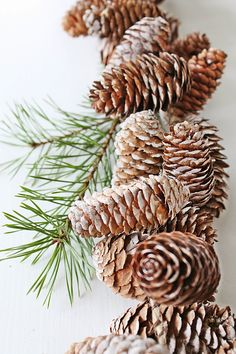 Christmas #dogeared  #sharethehappy