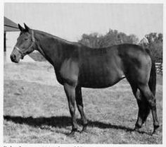 Baby League, by Bubbling Over out of La Troienne by Teddy. Dam of champion filly Busher and Busher's full sister the great broodmare Striking, both by War Admiral. Ancestress of champion and major broodmare Numbered Account (to whom California Chrome is inbred), Kentucky Derby winner and good young sire Super Saver, and the stallion Poker who was broodmare sire to both Seattle Slew and Silver Charm.