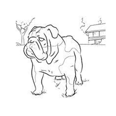 Printable bulldog coloring page Free PDF download at http