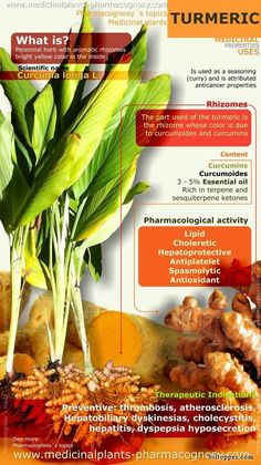 Healthy herb Turmeric benefits infographic.