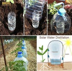 """Drip bottle irrigation Grow vegetables with 10 times less water with """"Solar Drip Irrigation."""" This is how we can eliminate completely the evaporation losses!"""