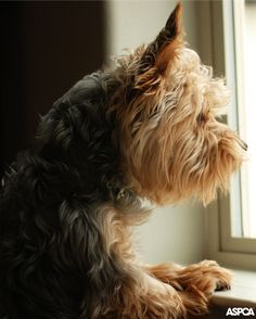 Help your dog beat separation anxiety with our top three tips!