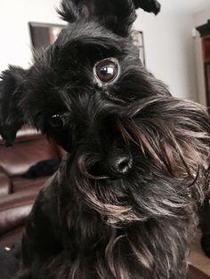My crazy Daisy