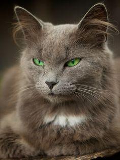 So pretty. Green eyed cat.
