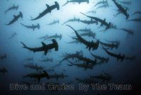 Liveaboard Diving in Coco with the best dive operator Aggressor Hunter Cocos Island, Underwater Animals, Scuba Diving, The Good Place, Northern Lights, Cruise, World, Travel, Diving
