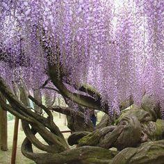 Google Image Result for http://www.thosemyfavoritethings.com/bss_img_super_funny/entertaining/purple-flowers.jpg