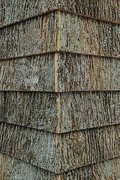 1000 Images About Bark Walls On Pinterest Rustic