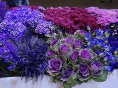 Llega la mejor vitrina de las flores en Colombia: Proflora