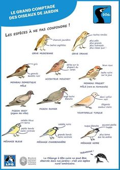 Tips for recognizing birds GONm Illustrations Mano Raw Gemstones, Minerals And Gemstones, Crystals Minerals, Zoology, Science And Nature, Love Birds, National Parks, Animation, Activities