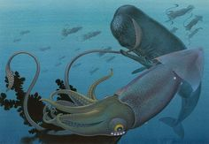 sperm whale fighting kæmpe blæksprutte