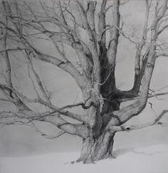 """T. Allen Lawson - """"Old Yankee"""" graphite on paper, 41 x 40 in."""