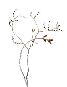 spring buds | STILL (mary jo hoffman)