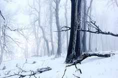 Winter forest by Ren Kuljovska Dead Forest, Forest Art, Beautiful Winter Scenes, Beautiful Images, Thing 1, Winter Magic, Photo Tree, Photos For Sale, Cool Artwork