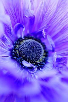 <3 #anemone