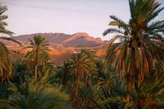 Tozeur: el caleidoscopio del Sáhara