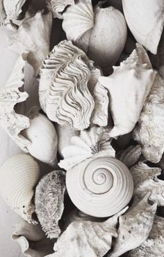 . shell. conchiglie.