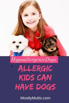 Geeignet hunde für allergiker Allergiehund: Welche