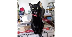 Closest Intersection: 1630 N. Arrowhead DR.. Lost cat: Budah! Buddah is a male Bombay, solid black and is very loved by our family. He went missing three days ago. He is an indoor cat, he is around five or six. He is very agile. He has a flap of skin that you can see when he walks or runs and he is neutered. He was wearing a red collar, that w