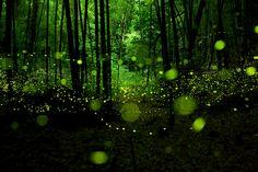 Biolumineszenz: Wenn die Natur im Dunkeln leuchtet
