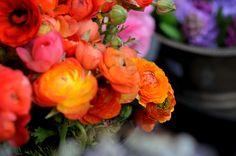 flower market, san francisco