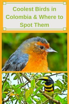 Where to see the coolest  bird species in Colombia!