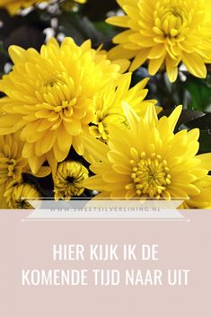 Silver Lining, Dutch, Sweet, Plants, Blog, Candy, Dutch Language, Blogging, Plant