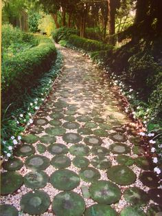 Amazing pathways