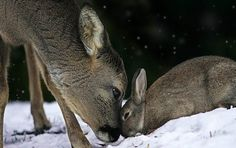 """Bambi And Thumper Do Exist"""