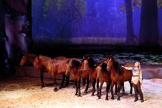 Cavalia is the most amazing show ever! No one picture can describe the magnitude of it.