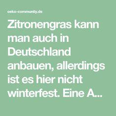 Zitronengras kann man auch in Deutschland anbauen, allerdings ist es hier nicht winterfest. Eine Anleitung zu Anzucht und Wachstumsbedingungen findet man hier.