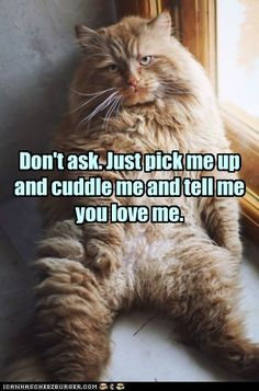 Don't ask. Just pick me up and cuddle me and tell me you love me.