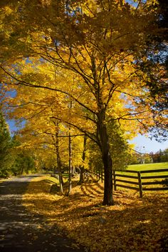 Weston, CT, maintains its rustic charm with strict two-acre zoning. Lots of open space and gorgeous vistas. Beautiful Places, Beautiful Pictures, Beautiful Life, Autumn Scenes, Seasons Of The Year, Autumn Garden, Countryside, Scenery, Places To Visit