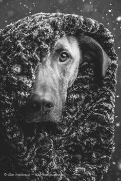Winter has come - GoT  All my pictures here can be licensed or bought as prints. Just send me a message to info@elkevogelsang.com