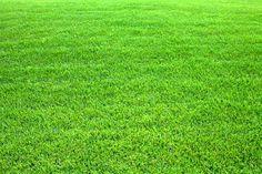 15 conseils pour entretenir une pelouse écologique