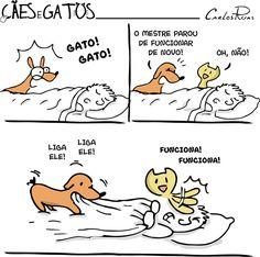 Cães e Gatos – Quando o dono para de funcionar