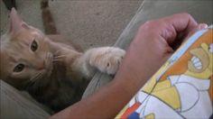 World's Most Polite Cat!!!