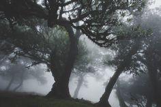 ▷ Madeira Reisebericht: Die unfassbare Schönheit der rauen Blumeninsel Funchal, Die Unfassbaren, Celestial, Outdoor, Wood, Mystical Forest, Hypnotized, Mists, Travel Report