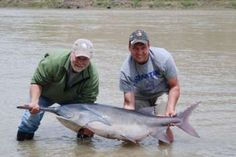 Larry and Jake Fischer wtih Mo. River paddlefish 2013.1414