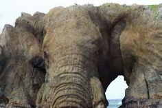 """Here is a little """"help"""" seeing the Elephant at Elephant Rock Bandon, Oregon"""