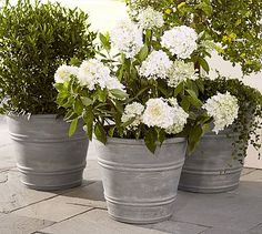 Basile Planters #potterybarn - plastic planters painted gray