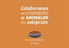 En nuestra web, destinamos un espacio gratuito para la publicación y difusión de casos de animales en adopción de toda España: http://veterinariosolidario.es/adopciones-de-perros-y-gatos-en-veterinario-solidario