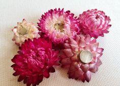 Magnete aus Strohblumen von Streublumen auf DaWanda.com