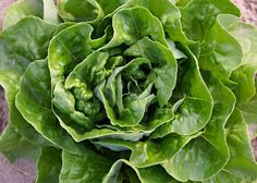 Are Some Leafy Greens Healthier Than Others? A Look at 9 Types