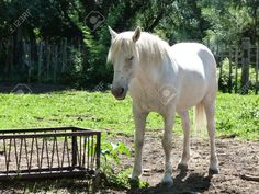 http://www.123rf.com/photo_17459966_horse-in-camargue-france.html