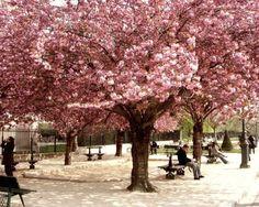 Pink Paris - Fine Art Photograph