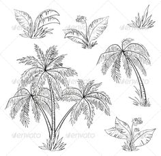 Palm trees, flowers and grass, monochrome contours on white background.  Vector EPS 8 plus AI CS 5 plus high-quality Jpeg. Editabl