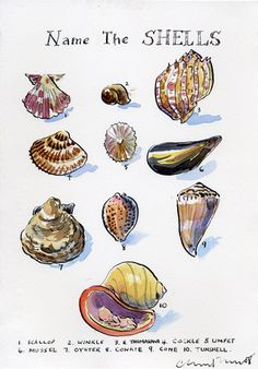 Pen and Ink illustrations by Claire Fletcher ~ Love the tiny little child in the shell ~ it must be a water baby :)