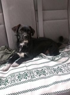 Found Dog - Unknown - Lilburn, GA, United States