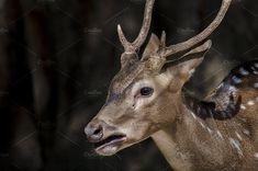 deer by bastera on @creativemarket